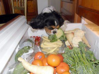 Molly with Healthy Dog Treats