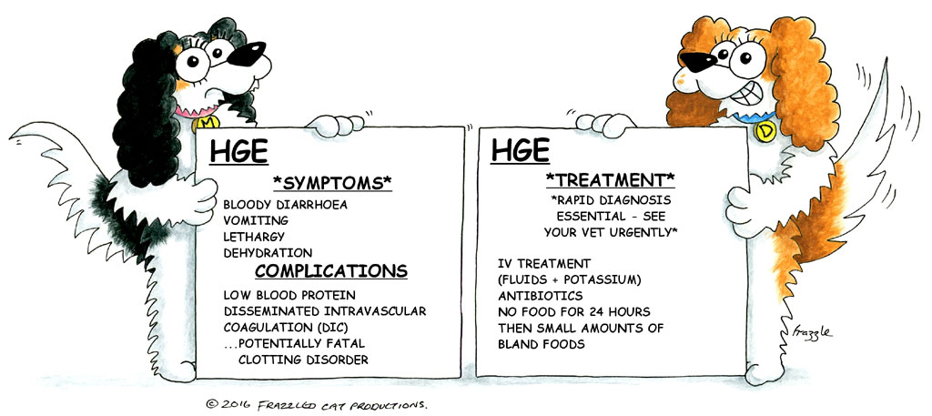 Home Treatment For Hge In Dogs