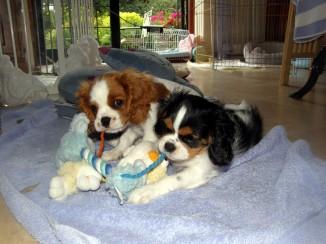 Molly & Dougall