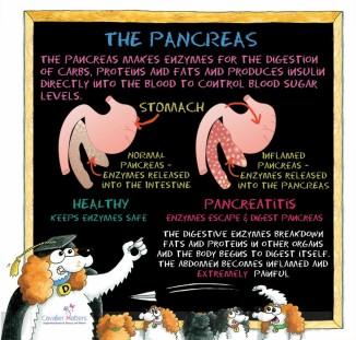The Pancreas in Pancreatitis